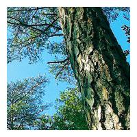 Piveteau Bois, un acteur majeur de la filière bois